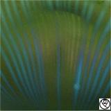 LTZ09026-vase vert soliflor_3
