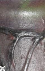 GAR10001-feuilles rosier_5.jpg